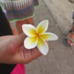 Champa květ