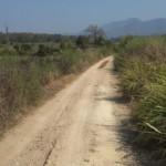 Cesta na farmu