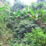 džungle, zaručeně spousta pijavic