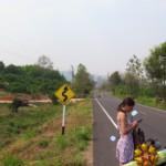 Thajské dopravní značky nemají chybu