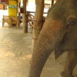 Tonka vs. slon