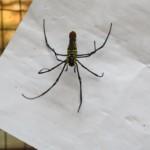 Nevim, jestli by tenhle pavouk taky neměl bejt radši někde zavřenej