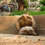 Budou želvátka :)