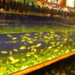 Ryby, co vám ožírají nohy, typická jihoasijská záležitost