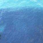 Hejno rybiček